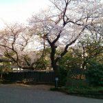 八芳園の桜 [白金台]