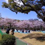 北の丸公園~靖国神社の桜