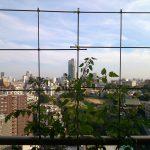 ベランダ菜園 – 定点観測 2014/06/14