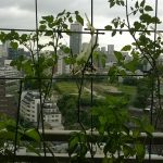 ベランダ菜園 – 定点観測 2014/08/31