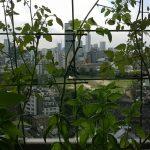 ベランダ菜園 – 定点観測 2014/09/14