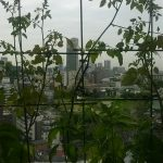 ベランダ菜園 – 定点観測 2014/09/21