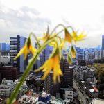 ベランダ菜園 – 定点観測 2014/11/16