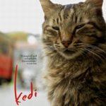 今日の映画 – 猫が教えてくれたこと(Kedi)